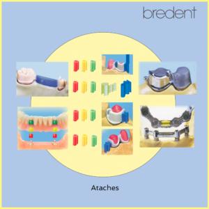AtachesBredent-2020